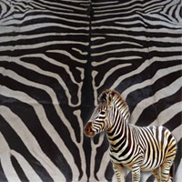 Zebra Leather