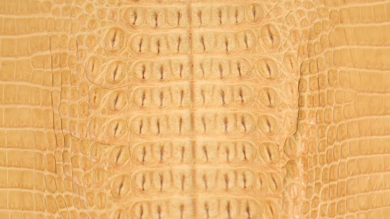 Genuine Crocodile Hornback Skin - Matte Finish in Buttercup