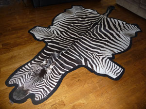 Beautiful felt backed zebra skin will be a gorgeous addition to any interior.