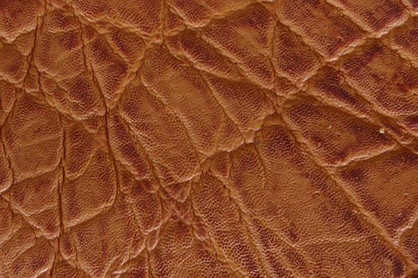 Elephant Skin in Honey Vintage